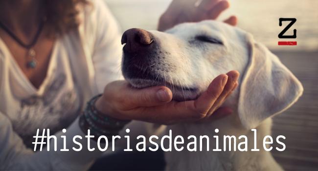 historias-de-animales.jpg